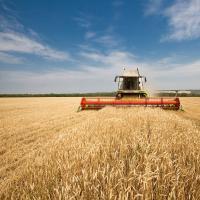 В Кущёвском районе завершена большая хлебная жатва