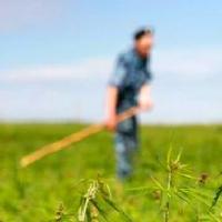Главам сельских поселений рекомендовано лично контролировать уничтожение наркосодержащих растений