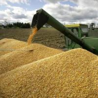 Аграриям Кубани упростят получение субсидий по сельхозкредитам