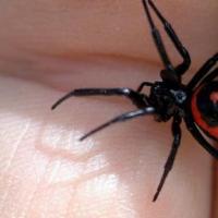Смертельно опасный паук распространяется в Ростовской области