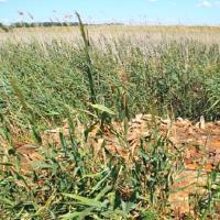 В Кущёвском районе обнаружено свыше 20 тонн биоотходов