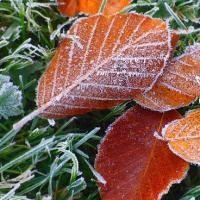Кубанские синоптики предупреждают о грядущих заморозках